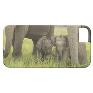 Corbett National Park, Uttaranchal, India. iPhone 5 Cover