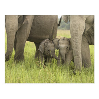 Corbett National Park, Uttaranchal, India. Postcard