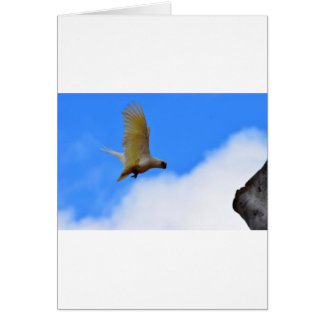 CORELLA BIRD QUEENSLAND AUSTRALIA CARD