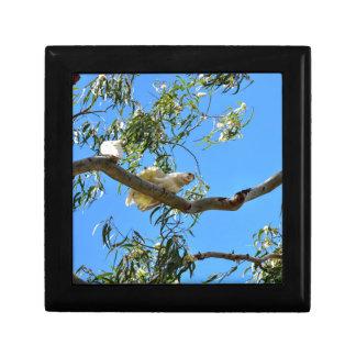 CORELLA BIRD QUEENSLAND AUSTRALIA GIFT BOXES