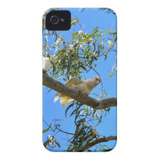 CORELLA BIRD QUEENSLAND AUSTRALIA iPhone 4 Case-Mate CASE