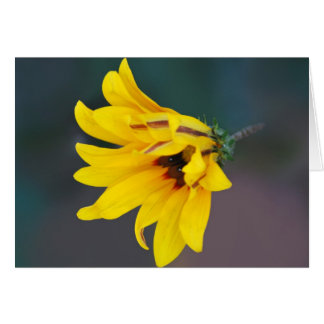 Coreopsis flower and its meaning card