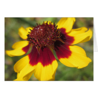 Coreopsis Flower Macro Photo Blank Greeting Card