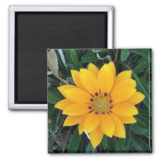 coreopsis square magnet