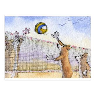 Corgi dog beach volleyball postcard