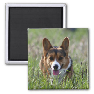 Corgi Dog Magnet