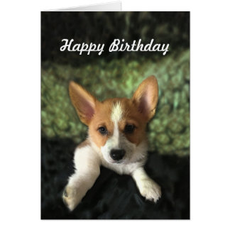 Corgi Puppy Happy Birthday Card