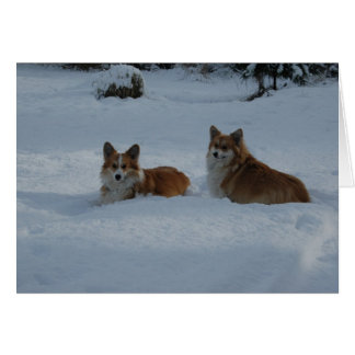 Corgis playing in snow card