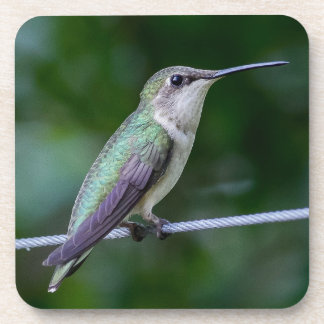 Cork Coaster - Blue Green Hummingbird Photo