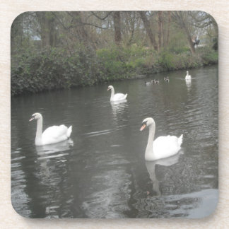 Cork Coasters Swans River Swimming