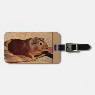 Corkboard Look Guinea Pig Luggage Tag