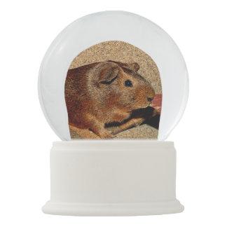 Corkboard Look Guinea Pig Snow Globe
