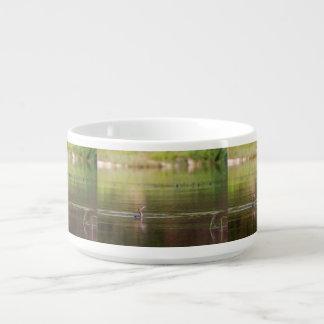 Cormorant bird swimming peacefully bowl