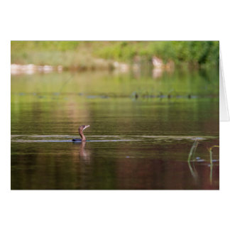 Cormorant bird swimming peacefully card