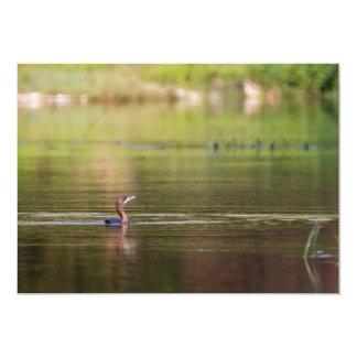 Cormorant bird swimming peacefully card