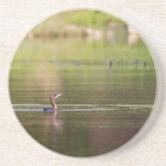 Cormorant bird swimming peacefully coaster