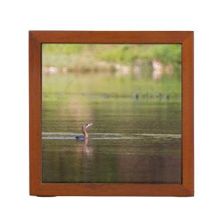 Cormorant bird swimming peacefully desk organizer