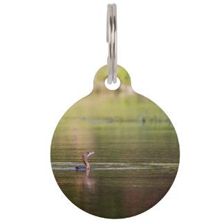 Cormorant bird swimming peacefully pet tag