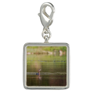 Cormorant bird swimming peacefully photo charms