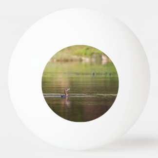 Cormorant bird swimming peacefully ping pong ball