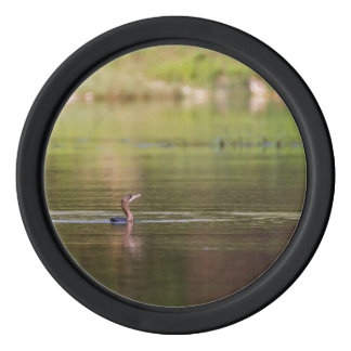 Cormorant bird swimming peacefully poker chips
