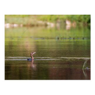 Cormorant bird swimming peacefully postcard