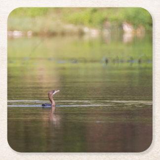 Cormorant bird swimming peacefully square paper coaster