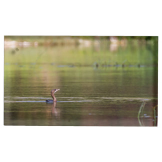 Cormorant bird swimming peacefully table card holders