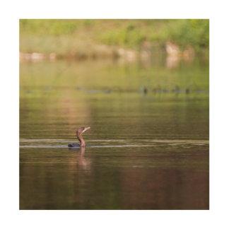 Cormorant bird swimming peacefully wood print
