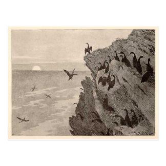 Cormorant by Theodor Severin Kittelsen Postcard