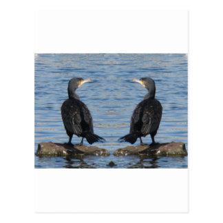 Cormorant mirror postcard