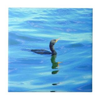 cormorant on blue tile