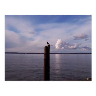 Cormorant On Pole Postcard