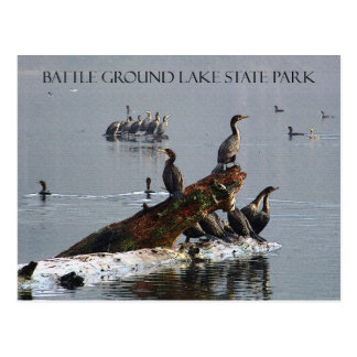 Cormorants at Battle Ground Lake Postcard