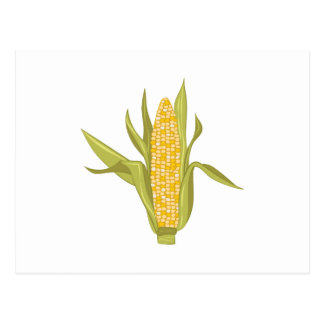 Corn Ear Postcard