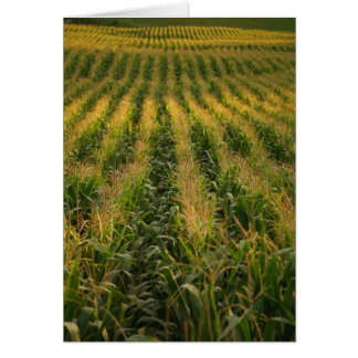 Corn field Card