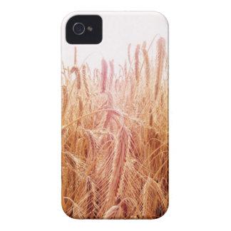 Corn field ears iPhone 4&4S-Hülle iPhone 4 Case-Mate Case