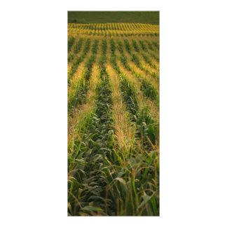 Corn field rack card