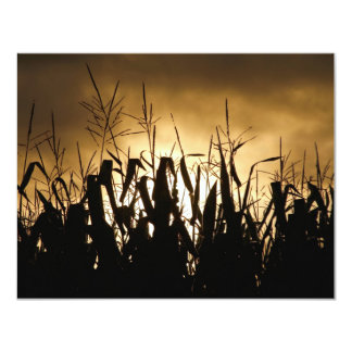 Corn field Silhouettes Card