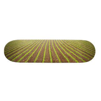 Corn field skate deck