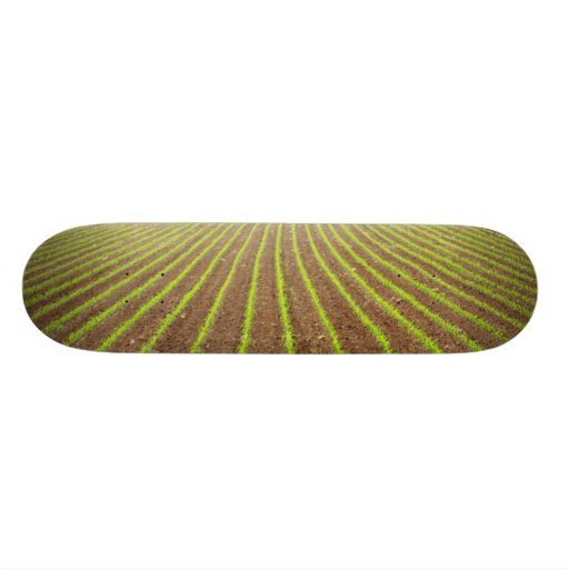 Corn field custom skateboard