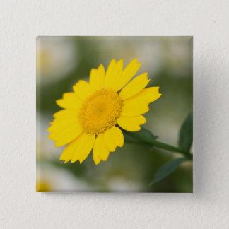 Corn Marigold 2 Inch Square Button
