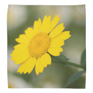 Corn Marigold Do-rags