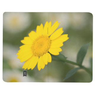 Corn Marigold Journal