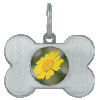 Corn Marigold Pet ID Tag