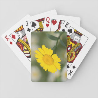 Corn Marigold Playing Cards