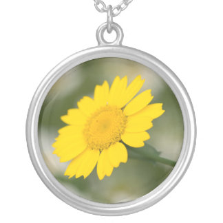 Corn Marigold Silver Plated Necklace
