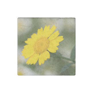 Corn Marigold Stone Magnets