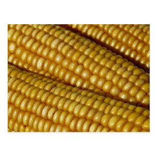 Corn on the Cob Postcard