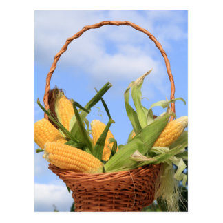 Corn on the Cob Postcard